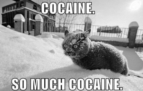 cat-cocaine1111_thumb